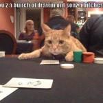 Afsløring af kattens adfærd