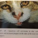 Kraeftssygdomme-katte-symptomer-naese-www.kattensliv.dk