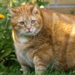 www.kattensliv.dk-tyk-kat