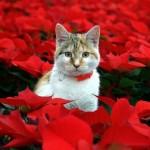 katte-og-julestjerner-www.kattensliv.dk