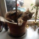 Adfærdsproblemer hos kat blev løst