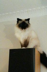 Kat fik akupunktur, laser og kiropraktik